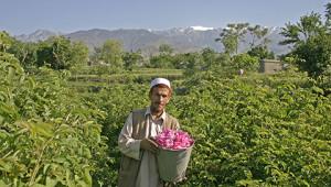 Olio essenziale di rosa dall'Afghanistan Dr.Hauschka