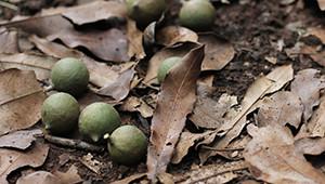 Noci di macadamia dal Kenia Dr.Hauschka