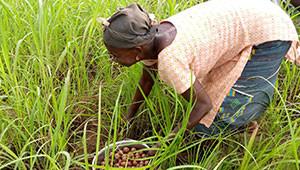 Burro di karité dal Burkina Faso Dr.Hauschka