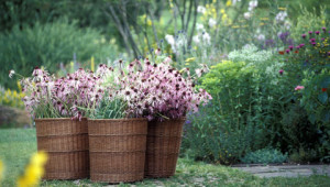 Giardino botanico di piante officinali Dr.Hauschka