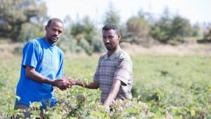 Partnership per le coltivazioni in tutto il mondo Dr.Hauschka